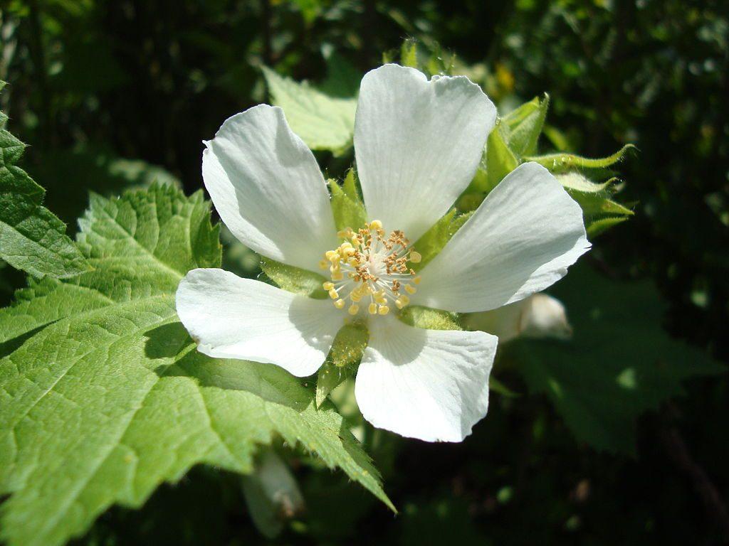 medicinal plants costa rica